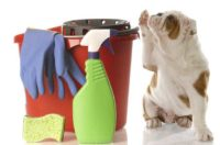 Care, Cleaning & Grooming
