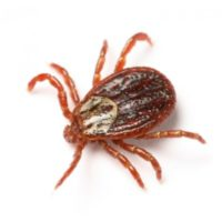 Tick and Flea Control