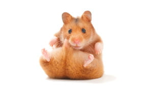 6 Interesting Facts About Hamsters