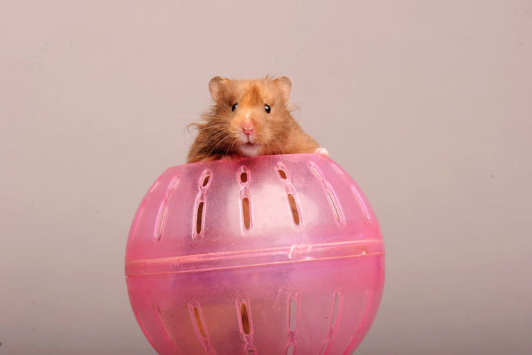 The benefits of allowing your hamster out of their cage