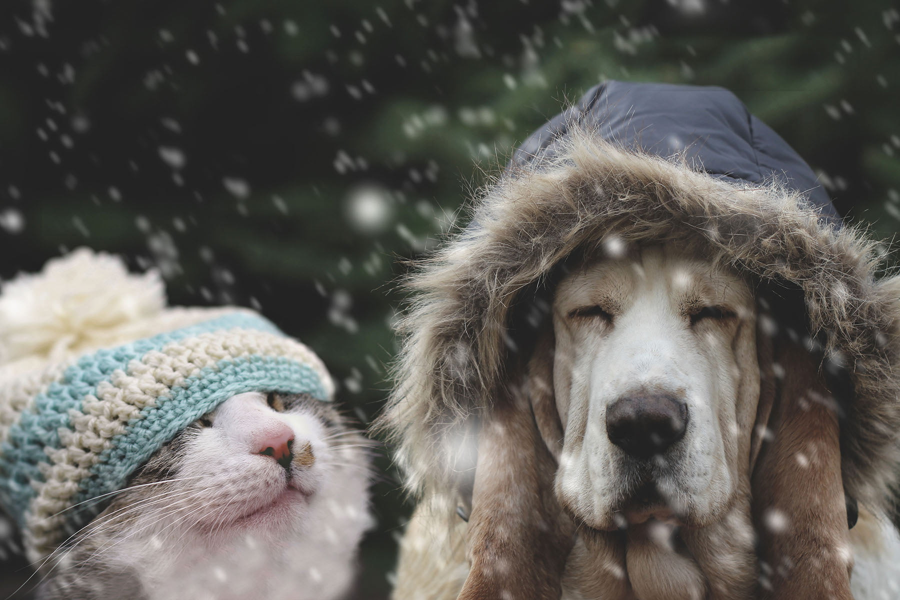 Pets and the effects of Winter